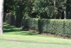 Adamsvale Wire fencing 15